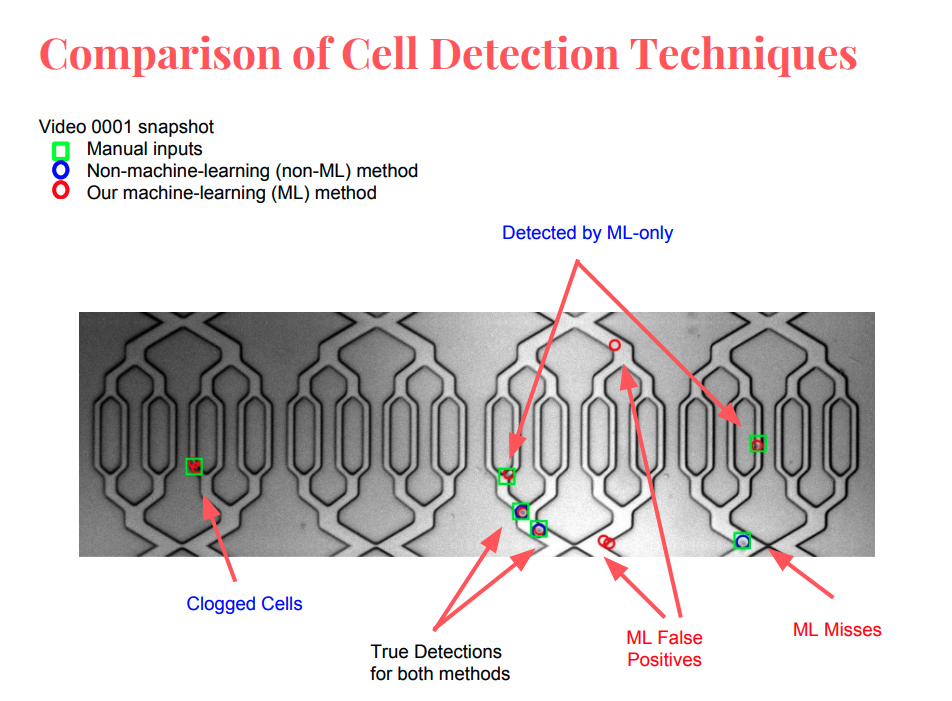 cell-detection-1